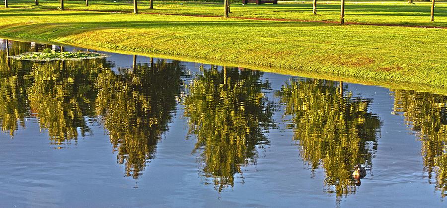Tree Photograph - Mirroring Trees by Heiko Koehrer-Wagner