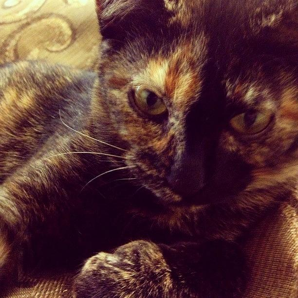 Kitten Photograph - Mischief by Adam Lawrence