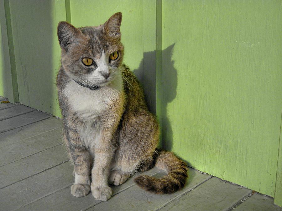 Cat Photograph - Miss Esmeralda by JAMART Photography