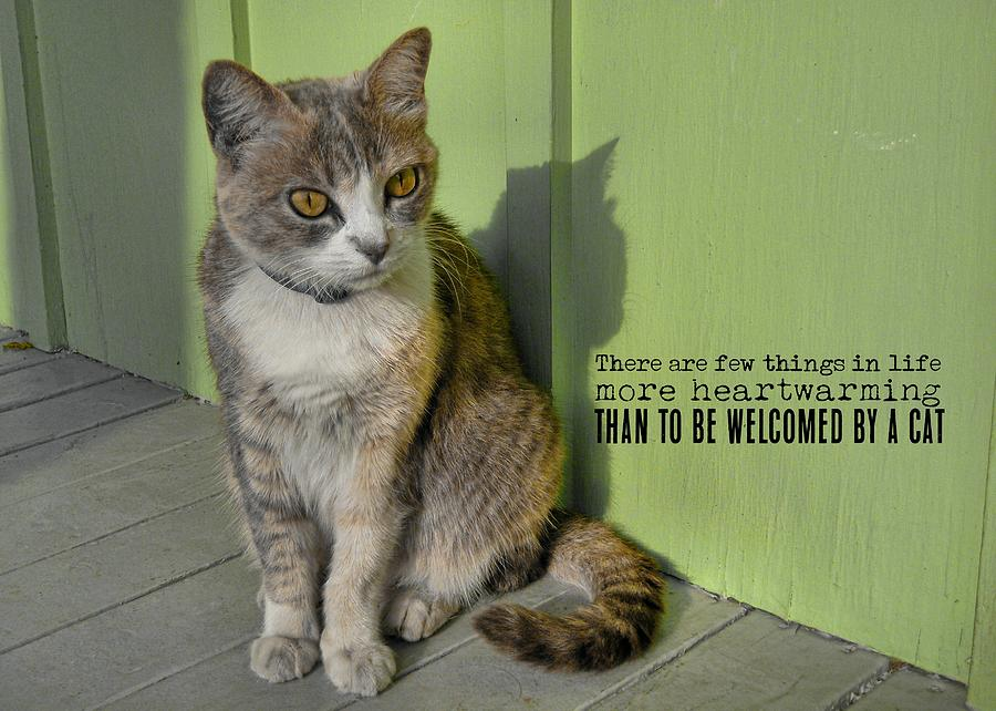 Cat Photograph - Miss Esmeralda Quote by JAMART Photography