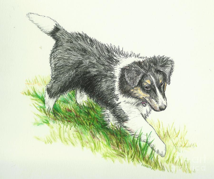 Sheltie Drawing - Miss Mary by Sue Bonnar