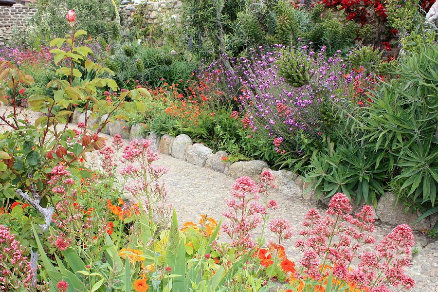 Garden Photograph - Mission Garden by Carol Groenen
