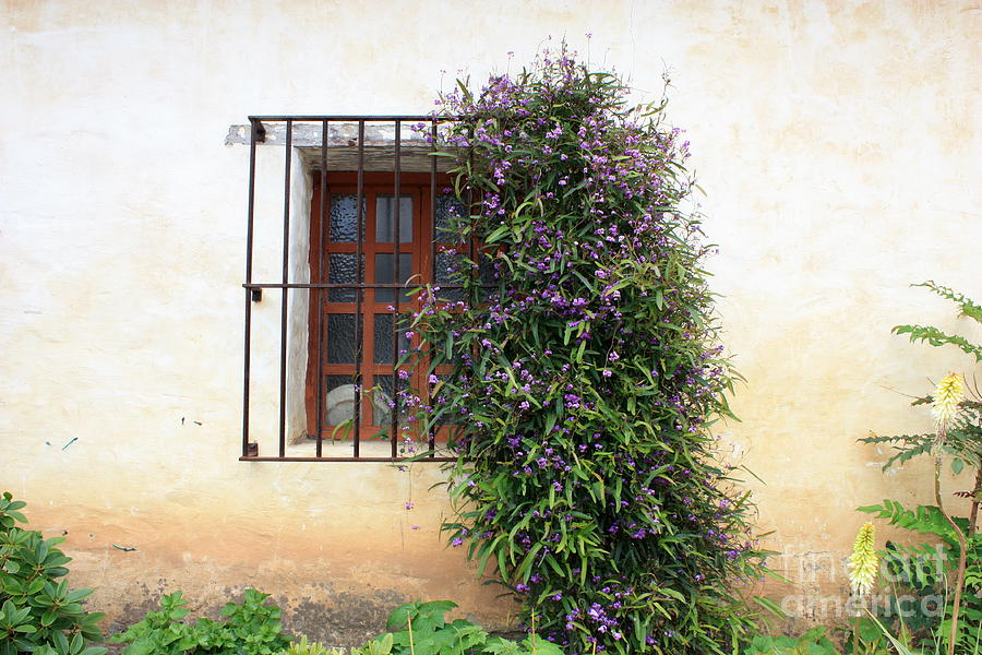Purple Flowers Photograph - Mission Window With Purple Flowers by Carol Groenen