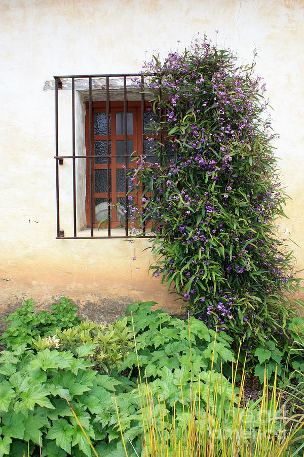 Mission Photograph - Mission Window With Purple Flowers Vertical by Carol Groenen