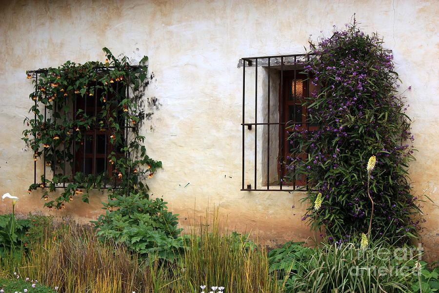 Vines Photograph - Mission Windows by Carol Groenen