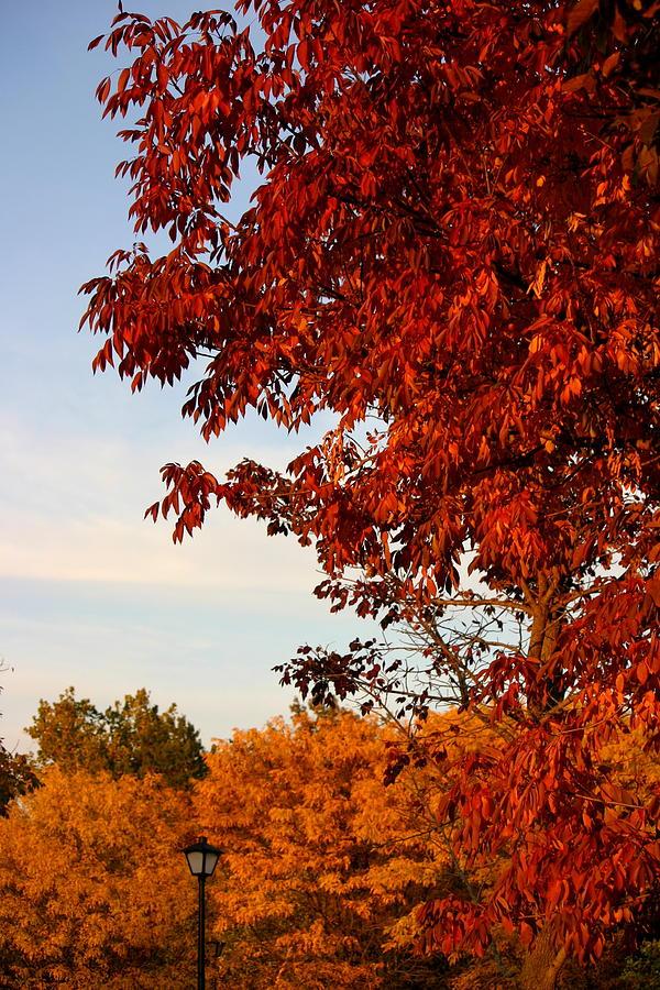 Fall Photograph - Missouri Fall by Karen King