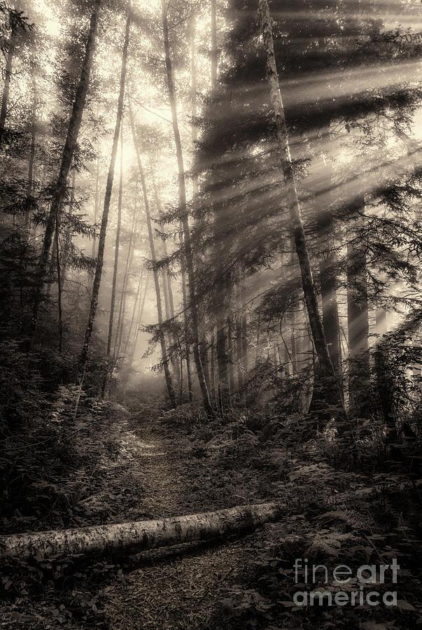 Mist On Last Chance Coastal Trail 3 Toned Photograph