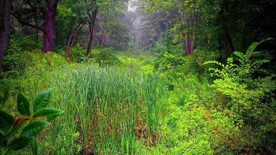 Lush Photograph - Mist On The Meadow  by Kirk Montgomery