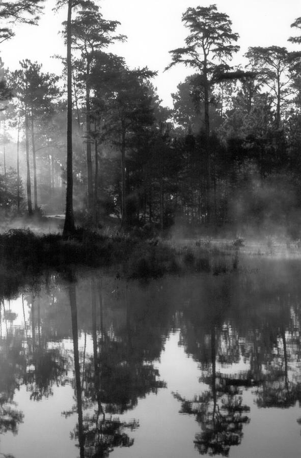 Swamp Photograph - Mist On The Pond by Suzanne Gaff