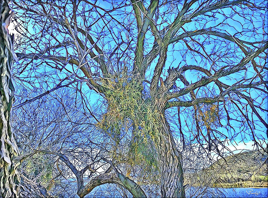 Mistletoe Digital Art - Mistletoe Tree by Teresa Prevey
