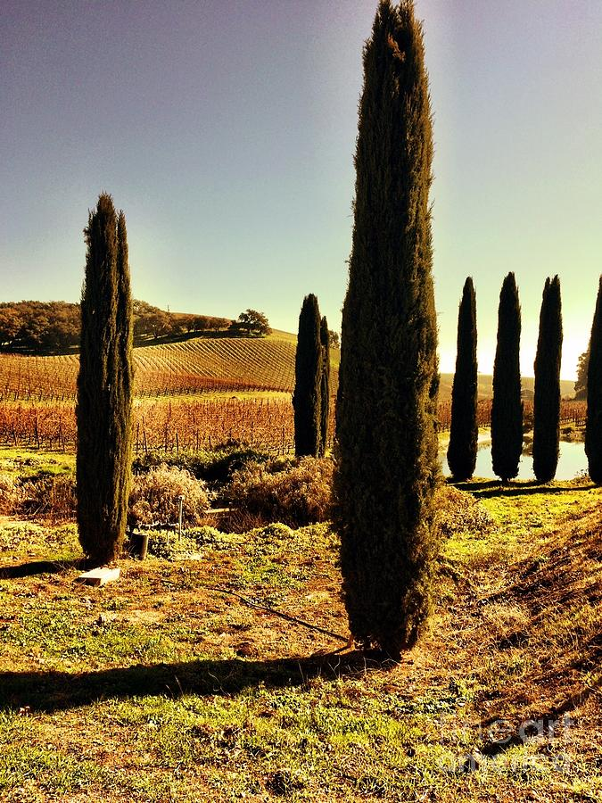 Cypress Photograph - Mistral by S Forte Designs