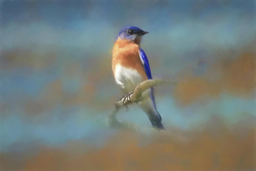 Eastern Bluebird Photograph - Misty Blue by Donna Kennedy
