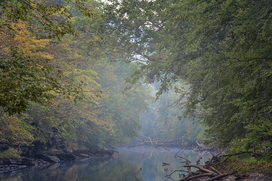 Creek Photograph - Misty Creek by Dale Wilson