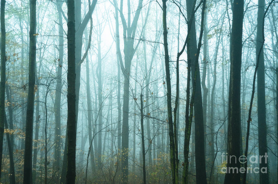 Woods Photograph - Misty Forest by John Greim