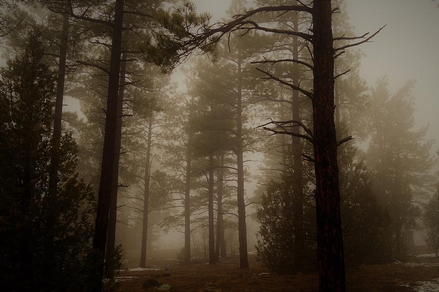 Misty forest morning by Broderick Delaney