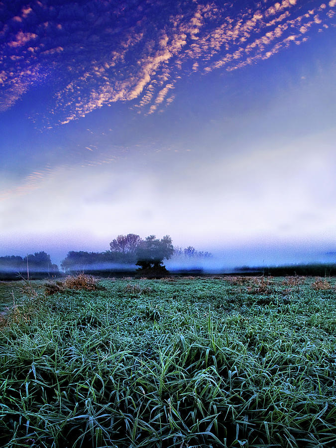 Horizons Photograph - Misty Frost by Phil Koch