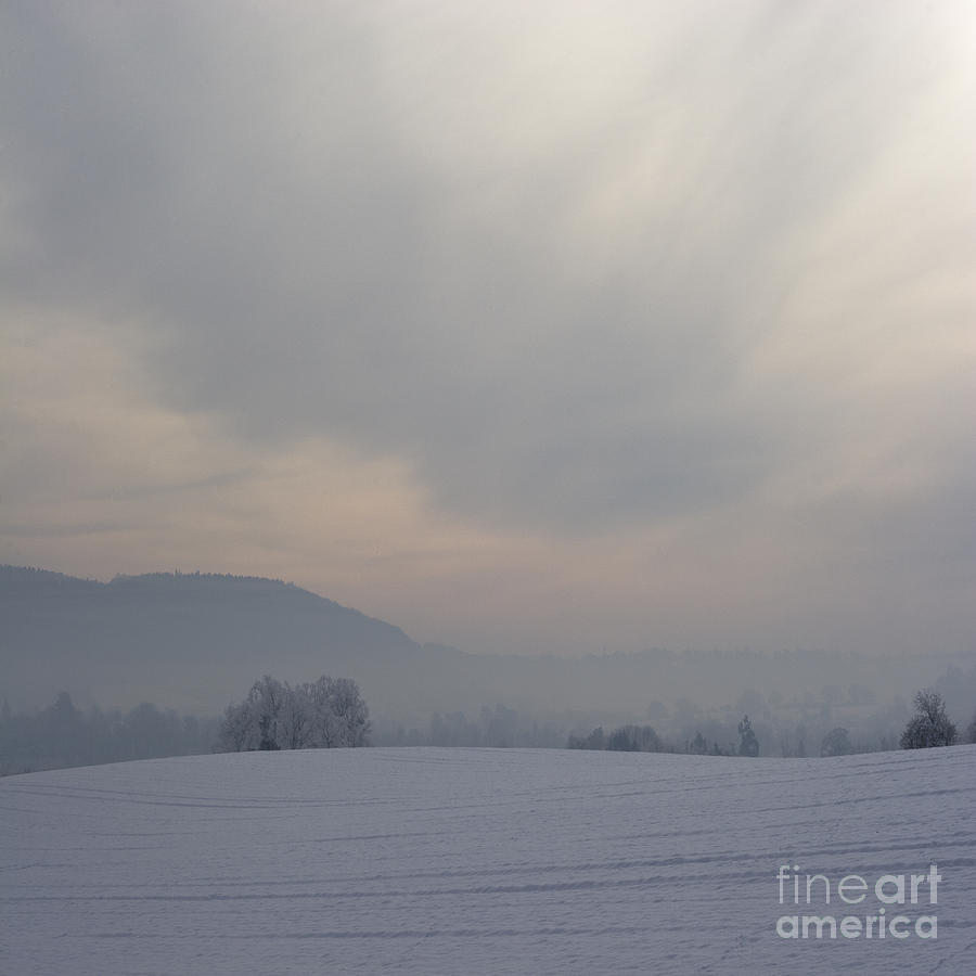 Winter Photograph - Misty Frosty Day by Angel  Tarantella