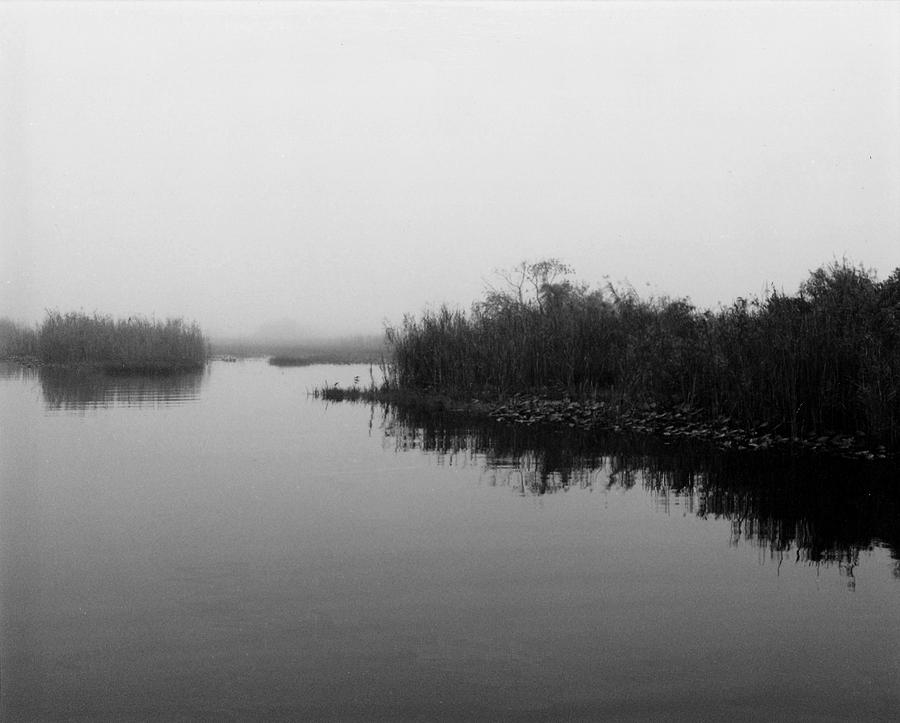 Nature Photograph - Misty Glades by Cindy Gregg