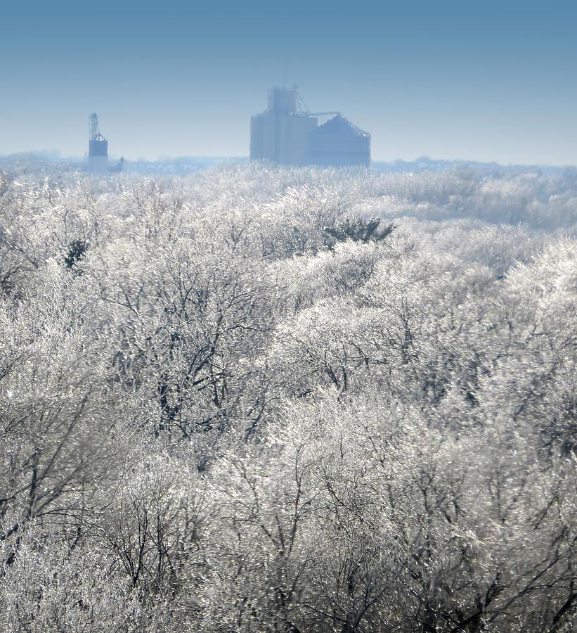 Misty Icy Day by Carolyn Fletcher