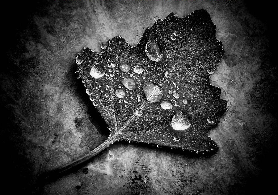 Black And White Photograph - Misty  by Karen Scovill