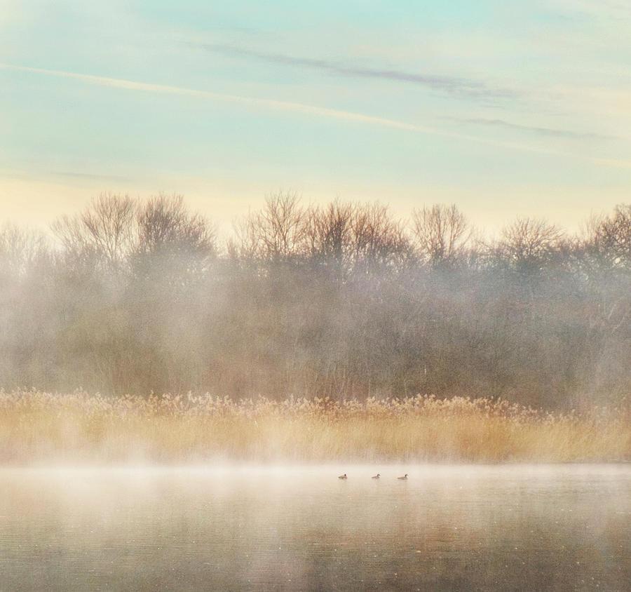 Misty Photograph - Misty Layers Lake by Vicki Jauron