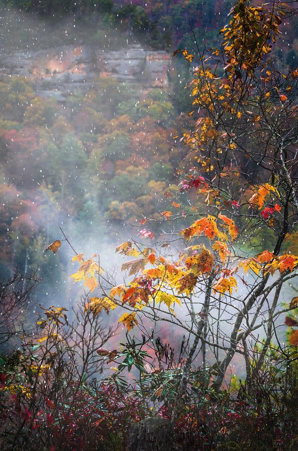 Color Photograph - Misty Maple by Diana Boyd