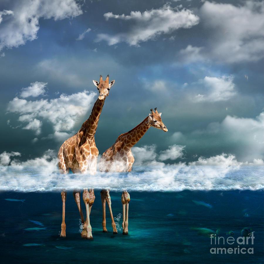 Sea Photograph - Misty by Martine Roch