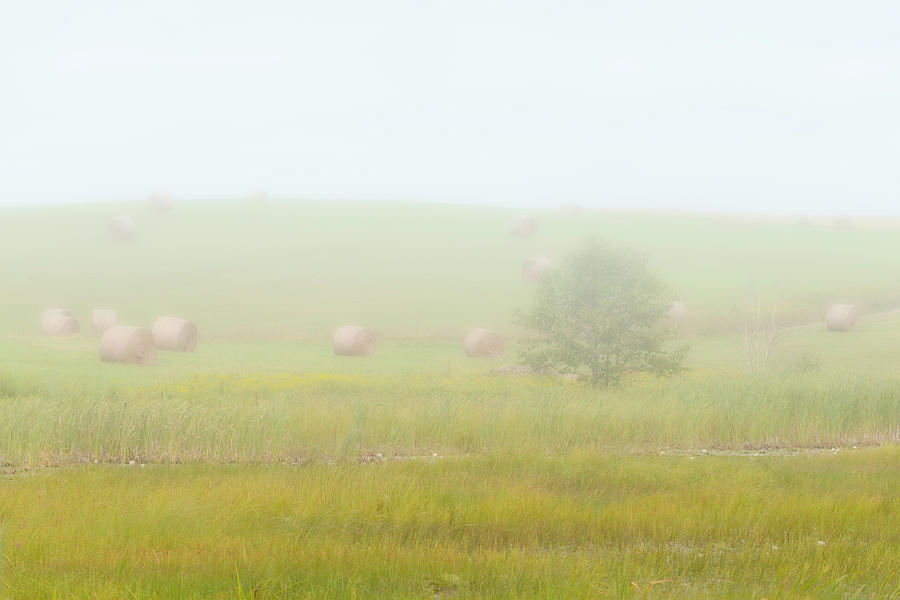 Landscape Photograph - Misty Meadow by Ben Thompson