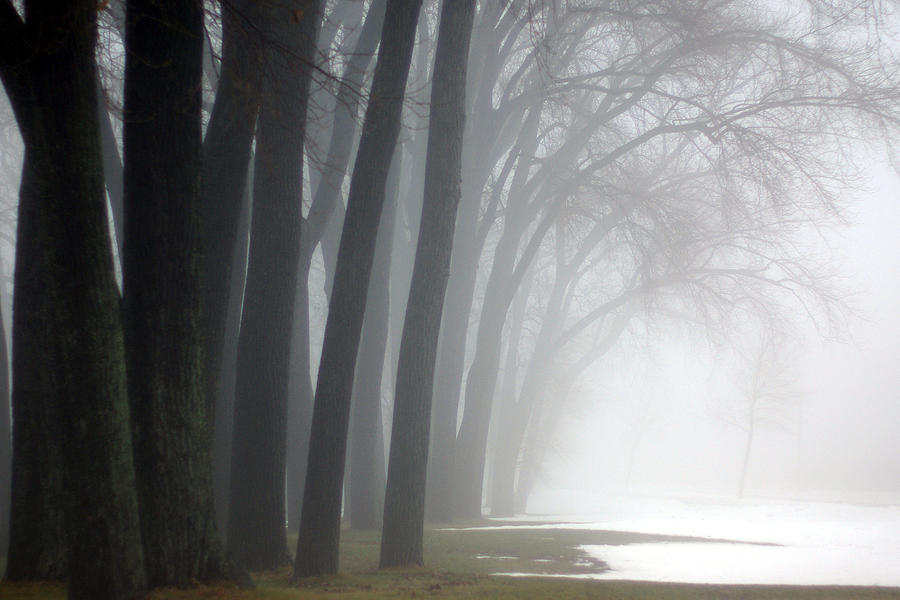 Trees Photograph - Misty Moments by Linda Mishler