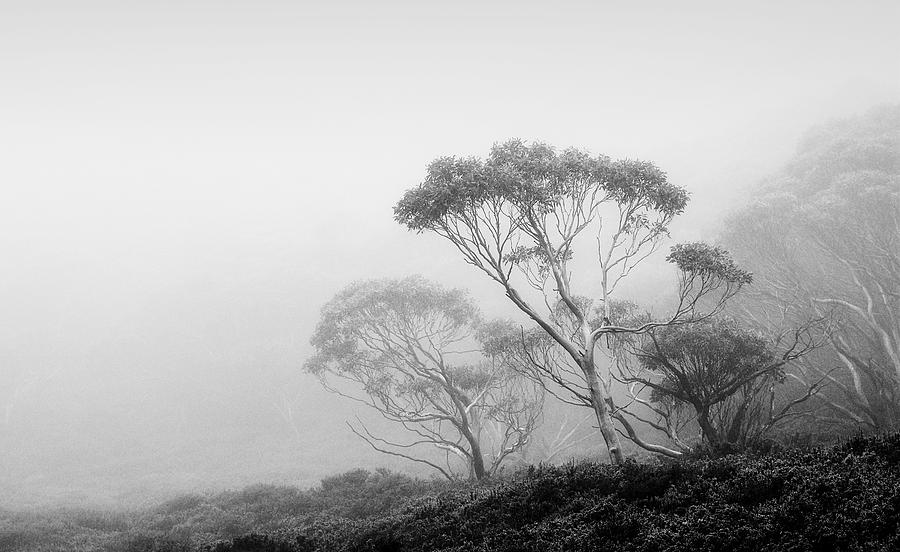 Misty morning 2 by Mihai Florea