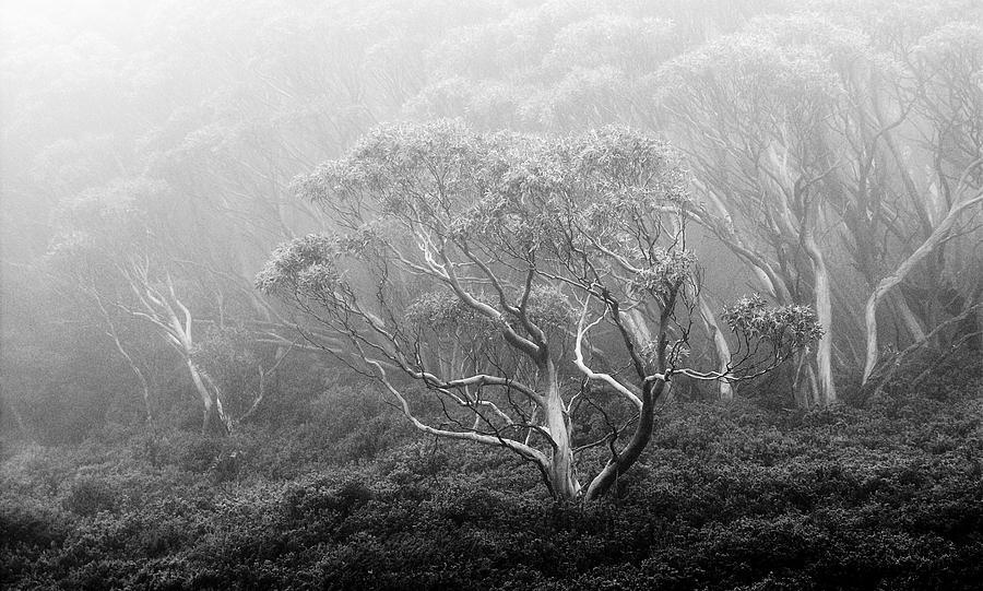 Misty morning 3 by Mihai Florea