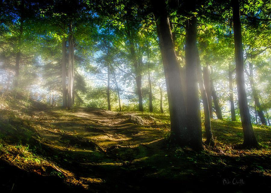Nature Photograph - Misty Morning by Bob Orsillo