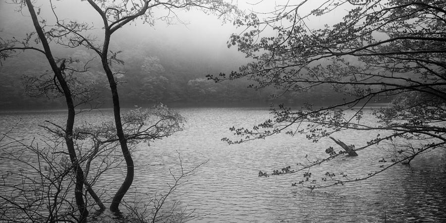 Misty Morning by Brad Brizek