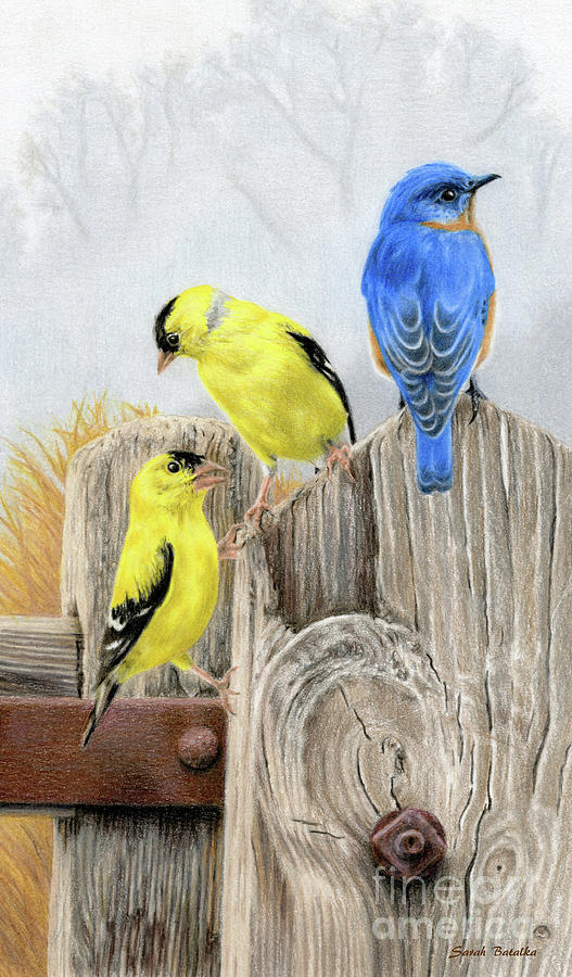 Birds Painting - Misty Morning Meadow- Goldfinches And Bluebird by Sarah Batalka