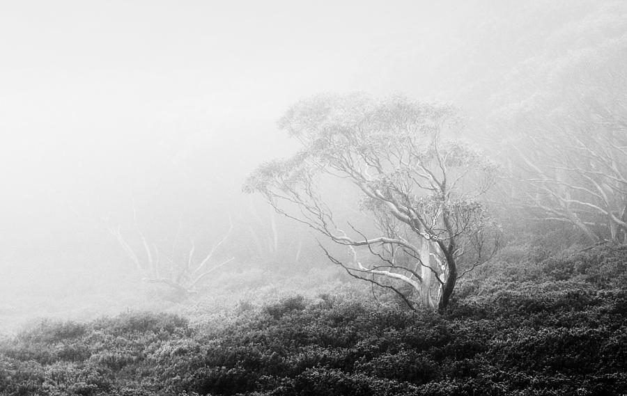 Misty morning  by Mihai Florea