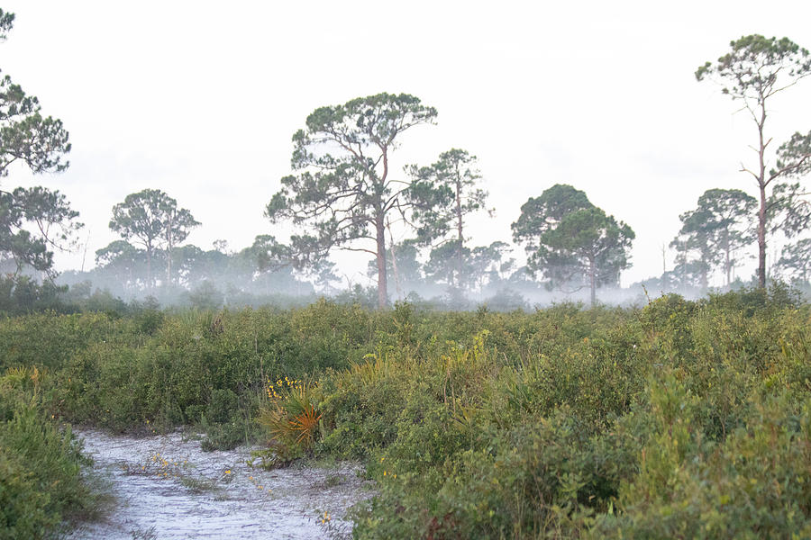 Trail Photograph - Misty Morning On The Trail by JR Cox