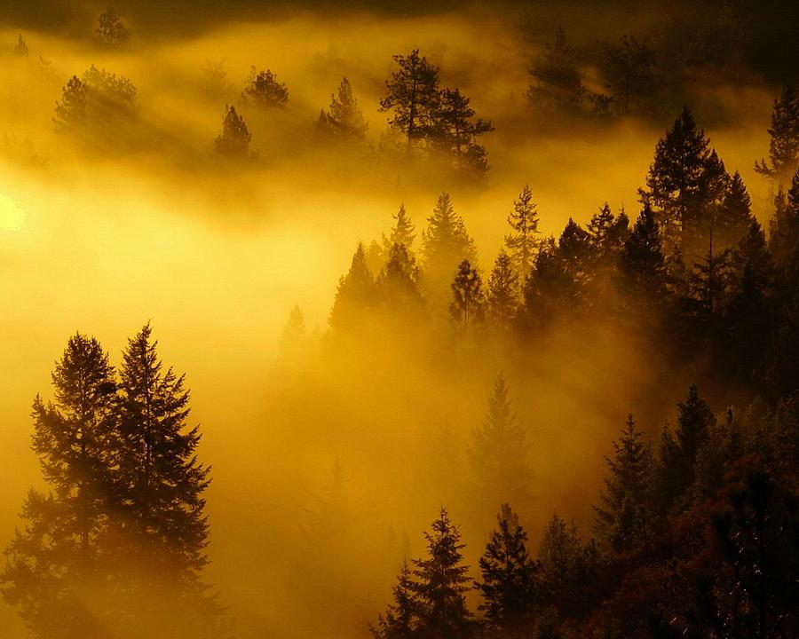 Misty Morning Sunrise Photograph by Ben Upham III