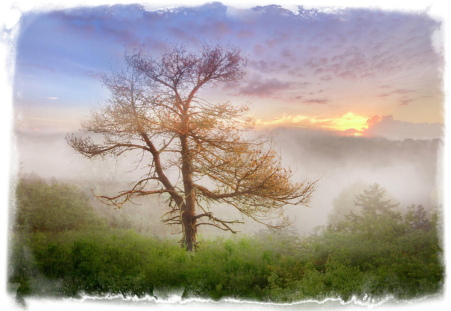 Appalachia Photograph - Misty Mountain by Debra and Dave Vanderlaan