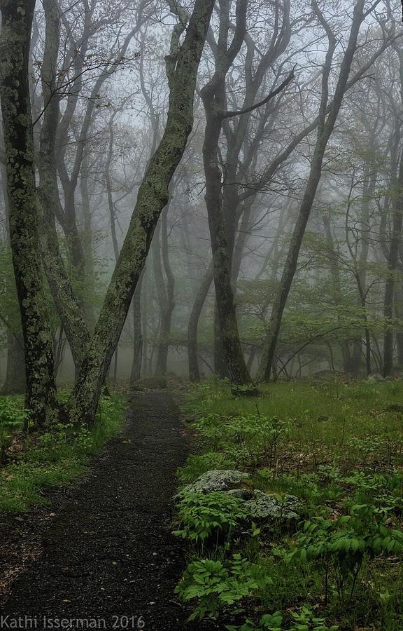 Blue Ridge Mts Photograph - Misty Path by Kathi Isserman