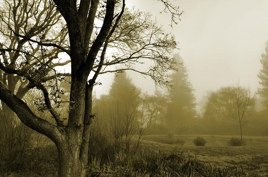 Misty Pond  by Spencer Hughes
