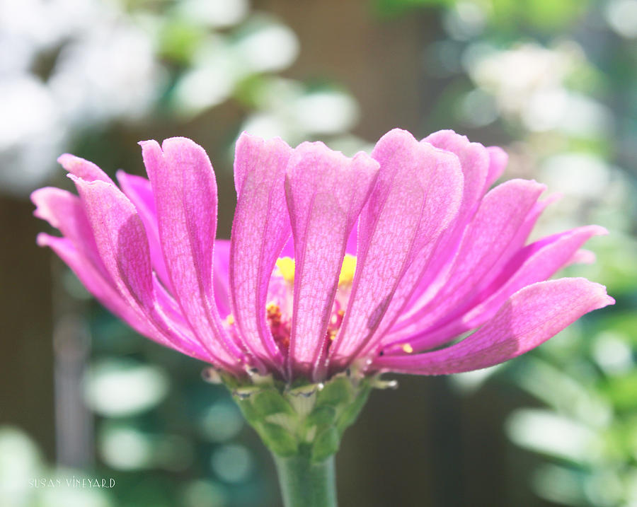 Flower Photograph - Misty Purple 3 by Susan Vineyard