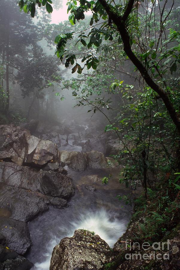 Puerto Rico Photograph - Misty Rainforest El Yunque Mirror Image by Thomas R Fletcher
