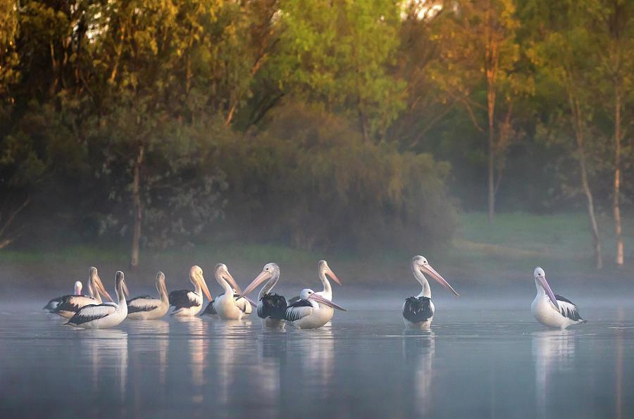 Misty Sunrise by Diana Andersen