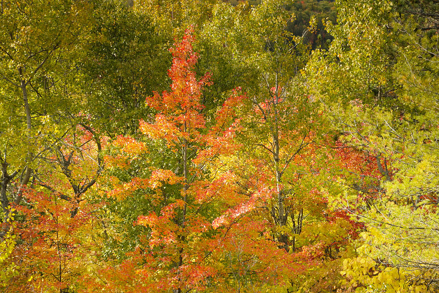 Tree Photograph - Mixed Autumn by Phill Doherty