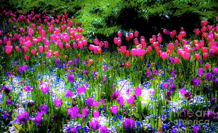 Mixed Flowers with Tulips by D Davila