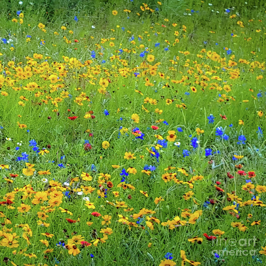 Mixed Wildflowers in Bloom 538 by D Davila