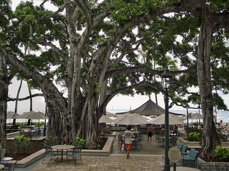 Hawaii Photograph - Moana Surfrider Banyan Court - Waikiki Beach by Daniel Hagerman