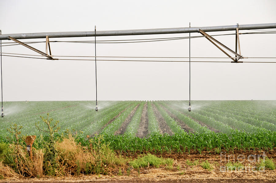 Irrigating Photograph - Mobile Irrigation Robot  by Shay Levy