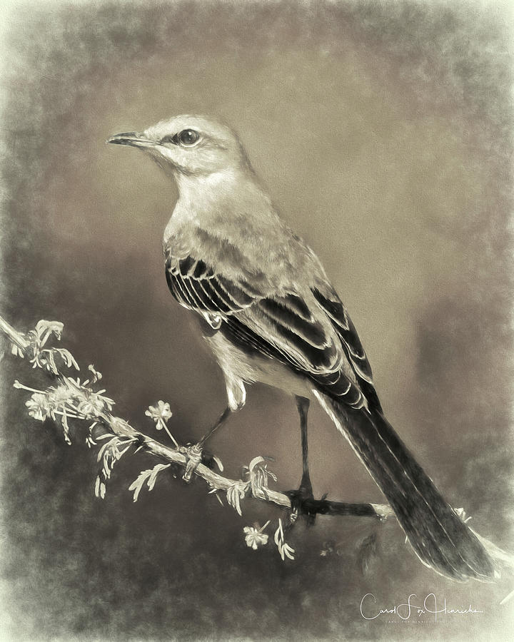 Mockingbird by Carol Fox Henrichs