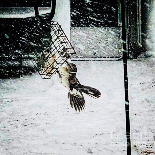 mockingbird by Donald Paczynski